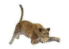 леопард большой кошки перевода 3D Стоковое Фото