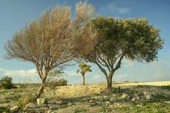 2 дерева высушенной дорогой, одним зеленым и другим Стоковая Фотография RF