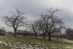 3 дерева в ландшафте зимы Стоковое фото RF
