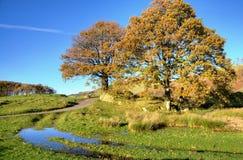 2 дерева в ландшафте осени Стоковое Изображение RF