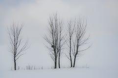 3 дерева в ландшафте Стоковые Фото