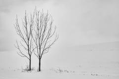 2 дерева в ландшафте Стоковое Изображение