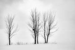 3 дерева в ландшафте Стоковая Фотография RF
