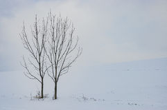 2 дерева в ландшафте Стоковые Изображения