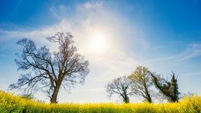 4 дерева в весеннем времени Стоковые Фото