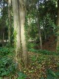 2 дерева в влюбленности Стоковые Изображения