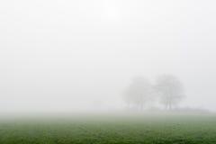 2 дерева в густом тумане Стоковое Фото