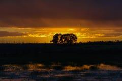 2 дерева в заходе солнца Стоковые Фотографии RF