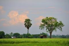 2 дерева в красивом желтом поле Стоковое фото RF