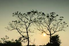 2 дерева в отражении воды Стоковое Изображение RF