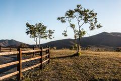 2 дерева вдоль линии загородки с горной цепью Стоковая Фотография