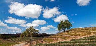 2 дерева в пейзаже винной страны Paso Robles Стоковое фото RF