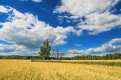 2 дерева в пшеничном поле Стоковые Фотографии RF