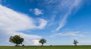 3 дерева в Пьемонте Стоковая Фотография RF