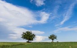2 дерева в Пьемонте Стоковые Фотографии RF