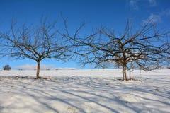 2 дерева в снеге с голубым небом Стоковое Изображение RF