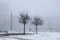 2 дерева в тумане в раннем утре Стоковое Фото