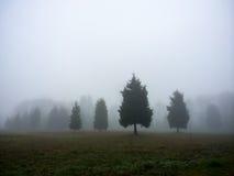 4 дерева в тумане Стоковое Изображение RF