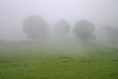 3 дерева в тумане Стоковое Изображение RF