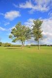 2 дерева в луге Стоковые Фото