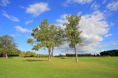 2 дерева в луге Стоковые Изображения