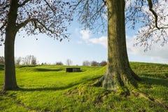 2 дерева в холмообразном зеленом ландшафте Стоковая Фотография