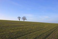 2 дерева зимы Стоковые Изображения