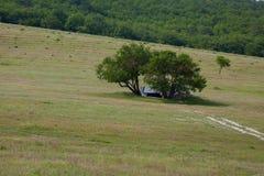 2 дерева к структуре в поле Стоковые Фото