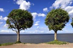 2 дерева на береге Стоковая Фотография