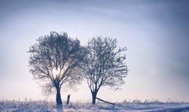 2 дерева на заходе солнца зимы Стоковое Изображение RF