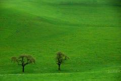 2 дерева на зеленой траве Стоковое Фото