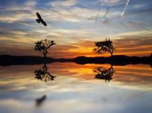 2 дерева на ноге горы Стоковая Фотография RF