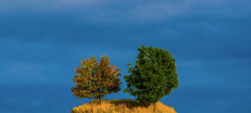 2 дерева на поле Стоковые Изображения