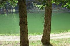 2 дерева на предпосылке озера горы Стоковая Фотография RF