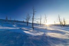 2 дерева на снежном горном склоне Стоковая Фотография RF