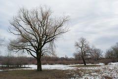 2 дерева на снежном поле Стоковые Фото