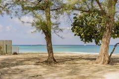 2 дерева на тропическом пляже Стоковое Изображение RF