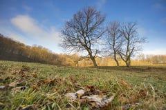 2 дерева на луге Стоковые Изображения