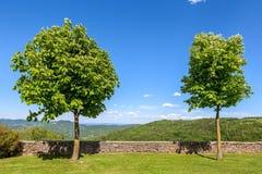 2 дерева на лужайке под голубым небом Стоковое Изображение RF