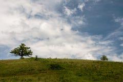 2 дерева на холме под облачным небом Стоковая Фотография