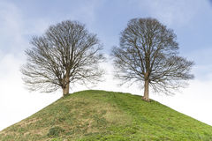 2 дерева на холме Стоковые Фотографии RF