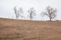 3 дерева на холме Стоковая Фотография RF