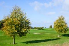 2 дерева осени на поле для гольфа Стоковое фото RF