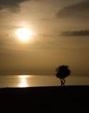 2 дерева подсвеченного Стоковые Фотографии RF