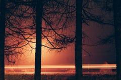 2 дерева против света автомобиля отстают в дороге Стоковые Изображения RF