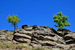 2 дерева растут на утесе Стоковое фото RF