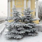 2 дерева растут перед домом Стоковые Фото