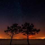 2 дерева растут совместно на предпосылке звезды Стоковые Фото