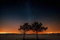 2 дерева растут совместно на предпосылке звезды Стоковые Фотографии RF