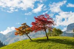 2 дерева с красивыми цветами падения Стоковое фото RF